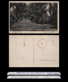 Kolekcja oryginalnych pocztówek Dębna lata 1897-1945 zakup własny